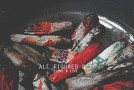 [AUDIO] ELMNT &#8211; All Figured Out ft. Lyve